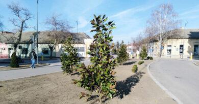 Počelo prolećno sađenje zelenila na Čilagu